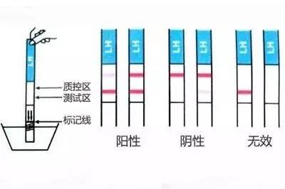验孕棒怎么用准确率高?多久能测出有没怀孕?