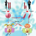 想早点知道胎儿性别,怀孕可预约去香港验血测男女
