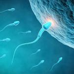 什么是胎儿性别测试纸?